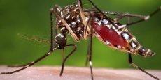 Sanofi a annoncé annoncé mardi 4 octobre avoir reçu sa onzième autorisation de mise sur le marché pour son vaccin contre la dengue.