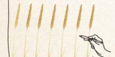 Le pacte Agri Éthique fixe le prix du blé sur trois ans. (Crédits: Agri Éthique)