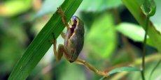 Les espèces d'eau douce, notamment les amphibiens, sont les plus touchées. De 1970 à 2010, leur population a diminué de 76% selon l'ONG.