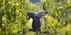 Dans ses prévisions d'octobre, le ministère de l'Agriculture tablait pour 2014 sur 46,5 millions d'hectolitres produits.