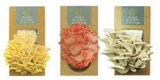 Les pleurotes des kits à champignons Prêt-à-pousser sont pour l'instant disponibles en trois coloris : gris, rose et jaune.