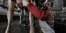 Sur 24 milliards de litres de lait produits l'an dernier en France, 530 étaient biologique.