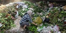 Chaque année, 1,3 milliard de tonnes de nourriture est gaspillée, estime l'Organisation des Nations unies pour l'Agriculture et l'Alimentation.