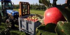 Depuis près d'un an, la Russie interdit l'importation de la plupart des produits alimentaires des pays qui la sanctionnent pour son rôle présumé dans la crise ukrainienne, une décision qui affecte particulièrement le secteur agricole européen.