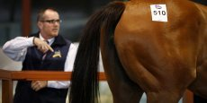 Le cheval le plus cher jamais adjugé dans le monde a été vendu 16 millions d'euros aux Etats-Unis dans les années 2000.