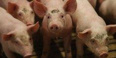 Les agriculteurs européens paient le prix de la politique internationale, selon le principal syndicat européen d'agriculteurs.