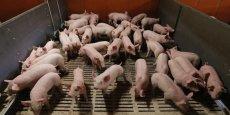Près de 10% des élevages (soit entre 22 et 25.000) sont au bord du dépôt de bilan, selon le ministère de l'Agriculture.