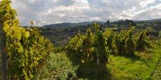 Les vignobles des côtes-du-Forez et de la côte-roannaise sont très en avance en matière de production bio.