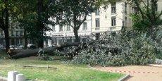 De très nombreux arbres ont été déracinés à Lyon. Ici dans les jardins de la préfecture du Rhône.