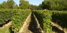 Les vins de graves craignent des pertes en matière d'oenotourisme, des bouleversements environnementaux au passage de la LGV Bordeaux-Toulouse et Bordeaux-Dax