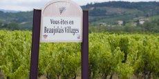 Plus de mille hectares pourraient avoir été endommagés par les intempéries dans le Beaujolais.
