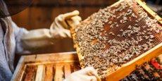 L'interdiction générale des pesticides néonicotinoïdes, connus pour leurs effets toxiques sur les insectes pollinisateurs, était prévue pour le 1er janvier 2017.