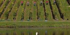 Cette évolution du climat, associée à un sol calcaire, a largement bénéficié aux vins effervescents anglais, qui représentaient les deux tiers des plus de 6 millions de bouteilles produites en 2014. (Photo:  vendanges dans le vignoble historique de Painshill Park, au sud-ouest de Londres, le 14 octobre 2015)