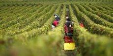 En 2003, la Champagne a été la première région viticole au monde à calculer son empreinte carbone et à mettre en place un plan qui a permis de définir plusieurs axes d'actions (viticulture durable, transport et fret, efficacité énergétique des bâtiments, achats responsables et accompagnement de la mobilisation) aboutissant à des solutions innovantes comme la réduction de 7% du poids de la bouteille de Champagne.