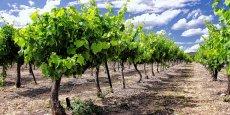 Les vignes, le vin... et le carbone sont au coeur des projets innovants soutenus par Aquitaine Science Transfert