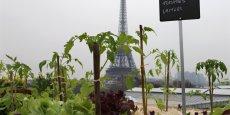 Les prochaines tours semencières dans Paris, les appels à projet de la mairie de Paris pour végétaliser d'ici à 2020 une centaine d'hectares de toits, dont un tiers pour l'agriculture urbaine, et réintroduire des espèces animales, sont des signaux forts de la mobilisation des élus et des concepteurs sur ces enjeux.
