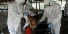 La souche identifiée par l'Agence nationale de sécurité sanitaire est qualifiée de hautement pathogène pour les volailles, souligne le ministère dans un communiqué.