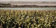 Fruition Sciences développe des capteurs et solutions d'aide à la décision en viticulture et oenologie.