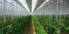 Selon la Chambre d'agriculture 66, les serres « deuxième génération » ne sont pas adaptées à toutes les productions.