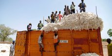 Des ouvriers agricoles burkinabé chargeant un conteneur de coton, dans le village de Dibien, à 150 km au sud-est Ouagadougou, la capitale.