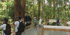 Biotope va concevoir et construire un sentier de découverte de la forêt tropicale au Gabon