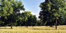 L'agro-foresterie qui réunit cultures et arbres sur une même parcelle, permet de limiter l'impact de l'agriculture sur le climat