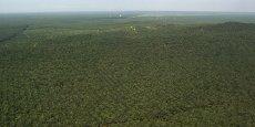 Plantation de palmiers à huile en Malaisie.
