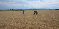 Pour ce laboratoire d'innovation territorial, l'ensemble des acteurs du monde agricole seront amenés à travailler en synergie.