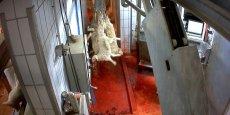 L214 révèle de nouvelles images d'agneaux de lait et de veaux tués dans un abattoir de Mauléon-Licharre.
