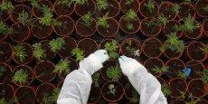 Les coûts de production de cannabis étant assez faibles, c'est sur la fiscalité que le prix de vente se joue, en grande partie.