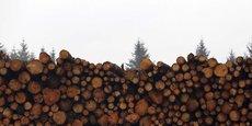 Puisque sept types de bois différents ont déjà passé les tests de transformation, d'ailleurs, les espèces utilisées pourront varier en fonction de politiques de valorisation des forêts de chaque pays.