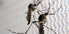 Le moustique OX513A mis au point par la société britannique Oxitec permettra de réduire la population des moustiques Aedes aegypti (photo).