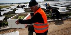 Des travailleurs récoltent du muguet dans la région de Nantes, en avril 2016.