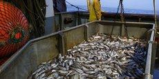 Selon les termes de l'accord de pêche entre la Mauritanie et l'UE, les quantités de captures de poissons par les navires européens sont aux alentours de 280 000 tonnes par an.
