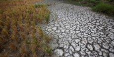Les villes détiennent les clés de la lutte contre le changement climatique