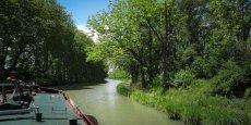 20 500 platanes ont été abattus depuis 2006 le long du Canal du Midi.