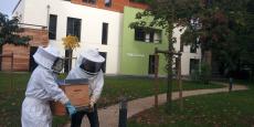 Une ruche de la Scop Biocenys est installée dans une entreprise toulousaine