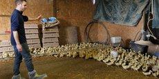 Les animaux doivent être confinés dans les élevages, a indiqué le préfet du Tarn.