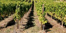 Présentation de quatre startups mettant le numérique au service de la filière viticole française.