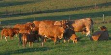 L'élevage de bovins viande concentre plus de la moitié des emplois agricoles liés à la filière viande en Nouvelle-Aquitaine.