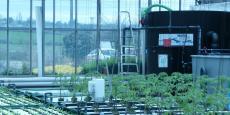 Unité expérimentale d'aquaponie APIVA dans le Rhône dont veut s'inspirer l'association de Toulouse.