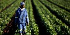 La suspension du Projet national de promotion de l'entrepreneuriat social (PNPER) ferait perdre au Togo près de 17 milliards de francs CFA. Une enveloppe budgétaire supportée par le Fonds international de développement agricole.