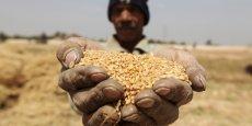 La production céréalière de cette année au Sénégal est estimée à plus de 2,5 millions de tonnes, soit une hausse de 20% par rapport à la précédente compagne.