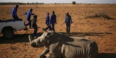 LA PREMIÈRE VENTE AUX ENCHÈRES DE CORNES DE RHINOCÉROS OUVRE EN AFRIQUE DU SUD