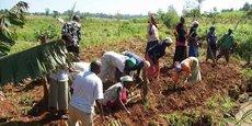 La sécheresse enregistrée en début d'année a impacté la production du secteur agricole qui représente à lui seul 30% du PIB du Kenya.