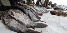 Au Bénin, le volume de la demande en poisson a dépassé les 200 000 tonnes en 2016.