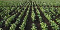 Septembre dernier, l'Autorité kényane de la biosécurité (NBA) avait donné son accord pour tester du coton Bt, génétiquement modifié.