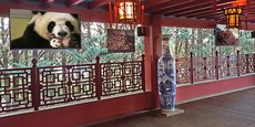 OnTech a installé ses écrans dans l'espace panda du zoo de Beauval.