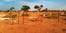 Du fait d'un climat sec et aride, la surface agricole utile (SAU) en Mauritanie ne représente que 2% (2,2 millions d'hectares) de la superficie totale du territoire (103 millions d'hectares).