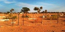 La Mauritanie fait partie des pays ciblés par le programme de la FAO visant l'amélioration de l'accès des communautés vulnérables rurales et urbaines à une alimentation durable, saine et équilibrée.